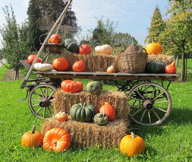 pumpkins-216012_640